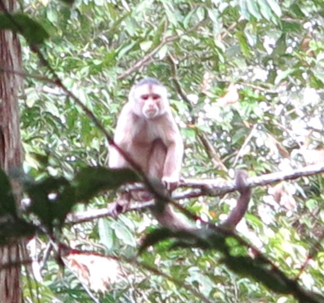 Squirrel monkey Ecuador Amazon Double-Barrelled Travel