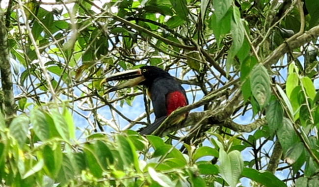 Toucan Ecuador Amazon Double-Barrelled Travel