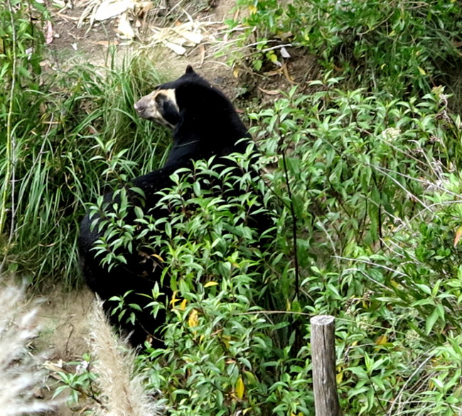 Andean bear Amaru Zoo Double-Barrelled Travel