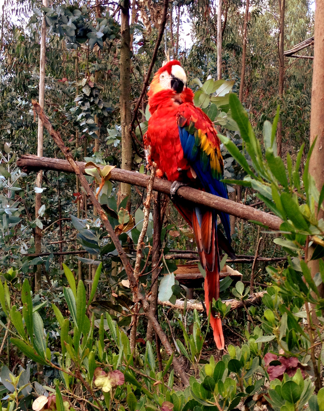 macaw Amaru Zoo Double-Barrelled Travel