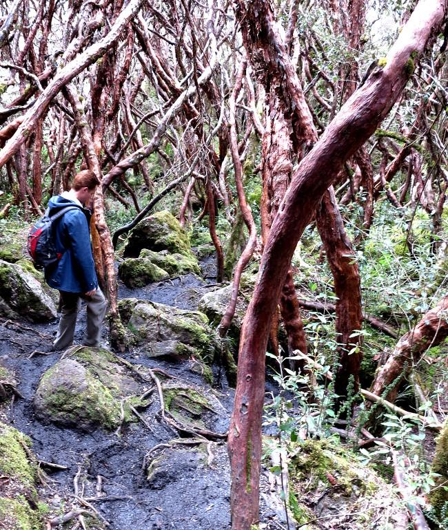 Cajas National Park Ecuador forest