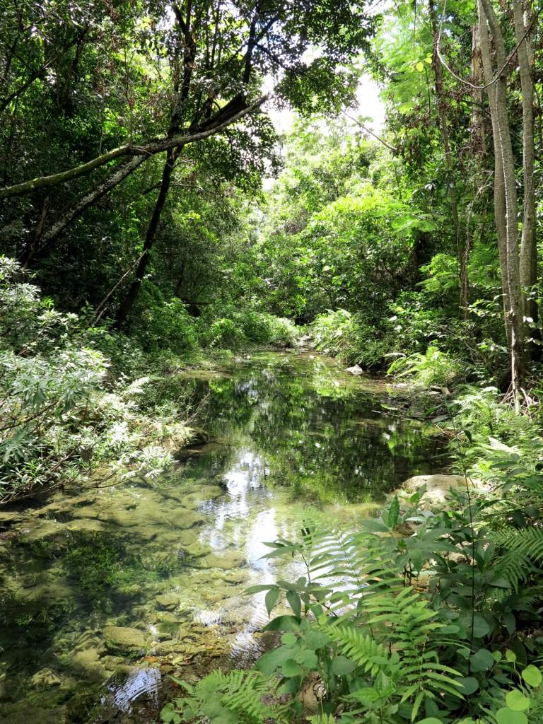 Jungle Cuba Double-Barrelled Travel