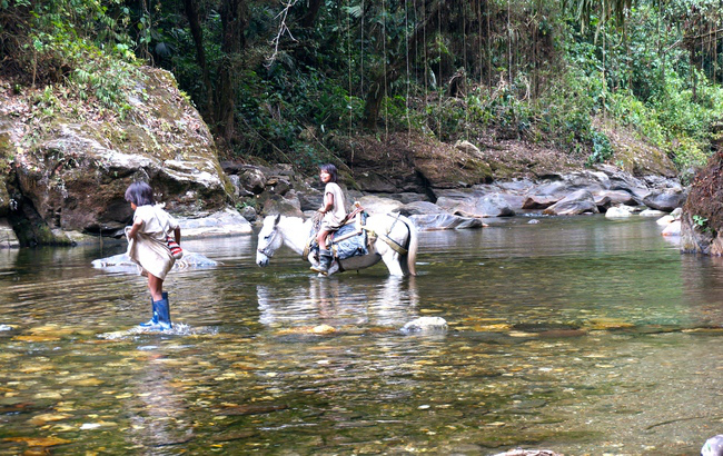 Roaming around the world horses Double-Barrelled Travel
