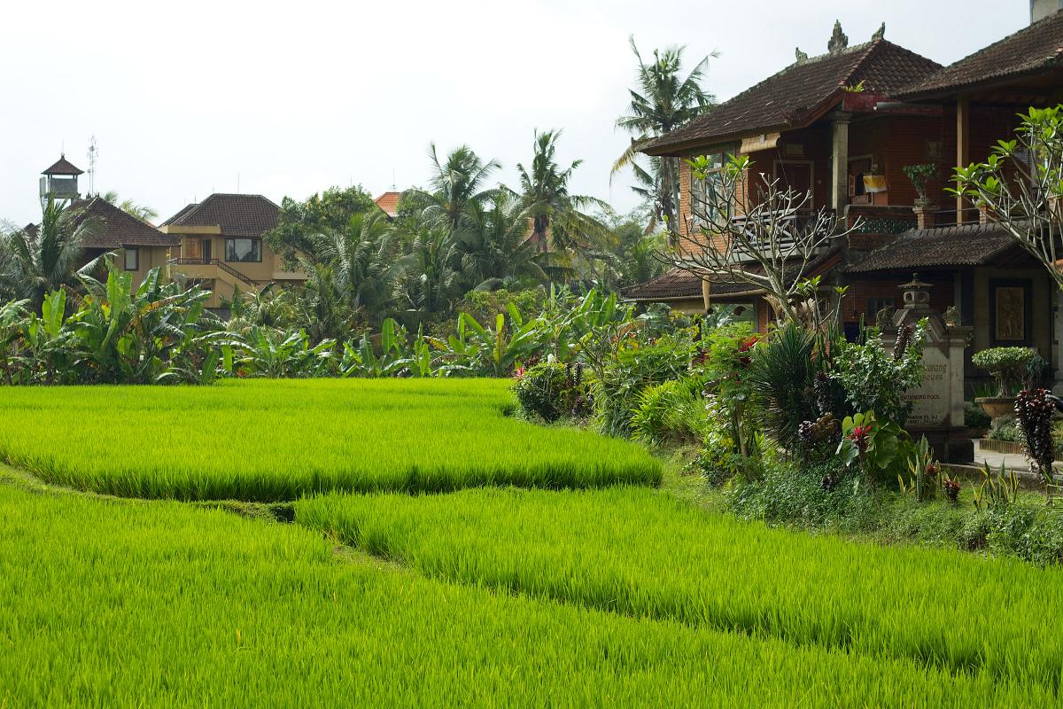 Hubud Ubud rice fields Bali Double-Barrelled Travel