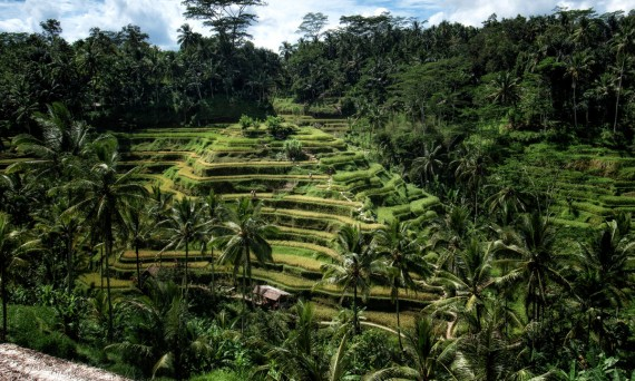 Ubud Bali Double-Barrelled Travel