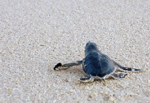 Baby sea turtle Cozumel Mexico Double-Barrelled Travel