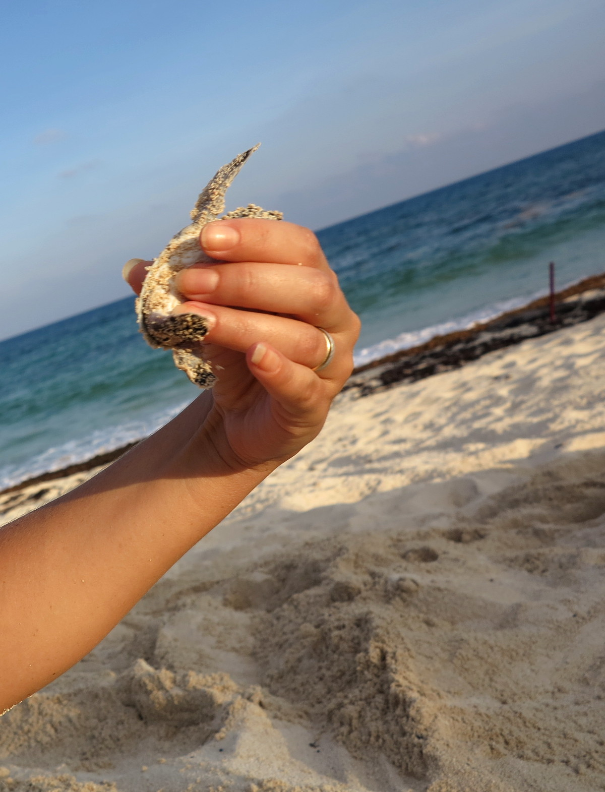 Holding baby sea turtle Cozumel Mexico Double-Barrelled Travel