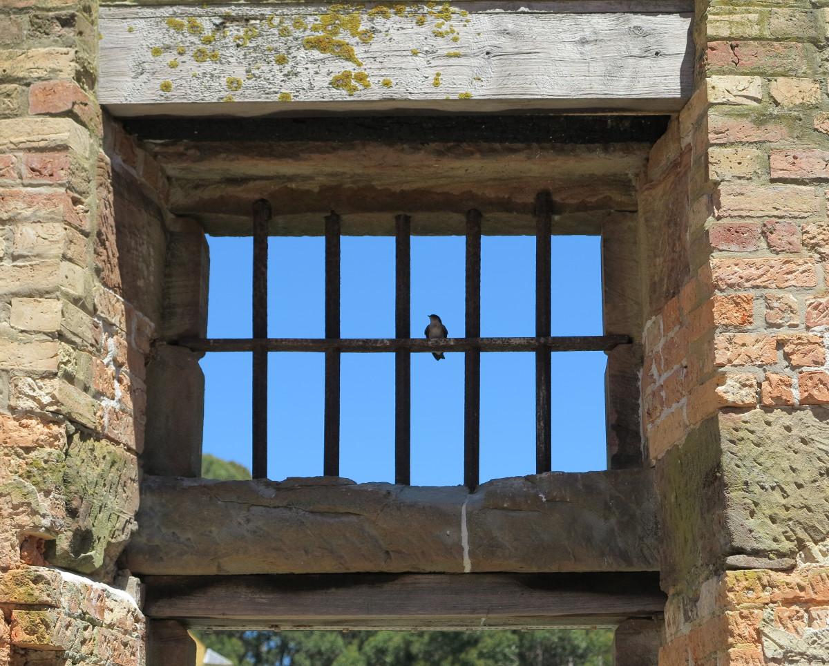 Port Arthur bird Double-Barrelled Travel
