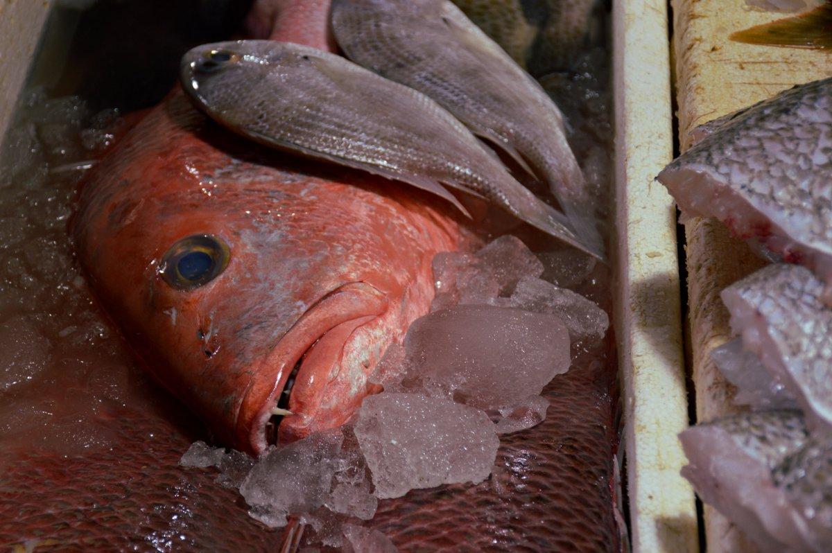FIsh Jimbaran fish market Bali Double-Barrelled Travel