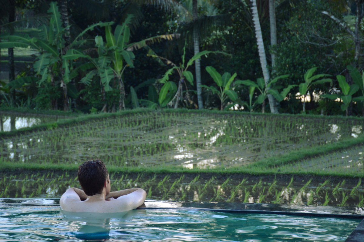 Pool with a view Ubud Double-Barrelled Travel