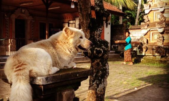 Street dog Ubud Bali Double-Barrelled Travel