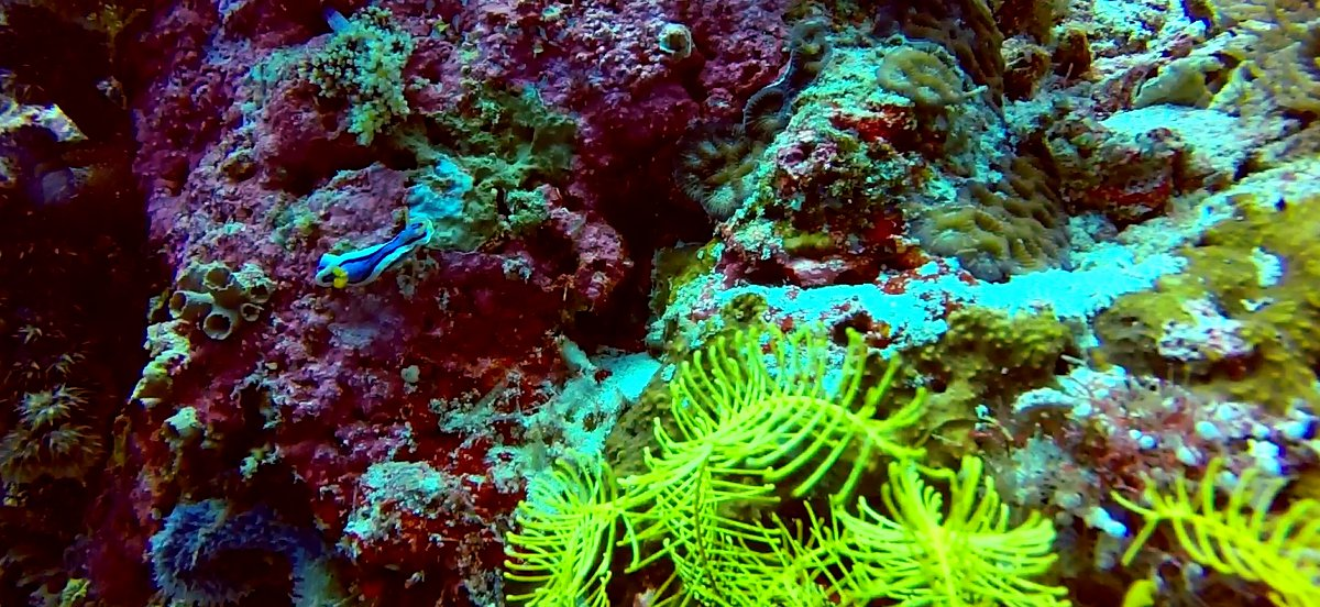 Nudi branch scuba diving Philippines Double-Barrelled Travel