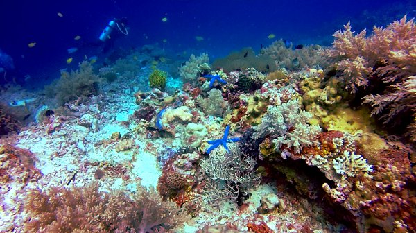 Scuba diving Philippines Double-Barrelled Travel