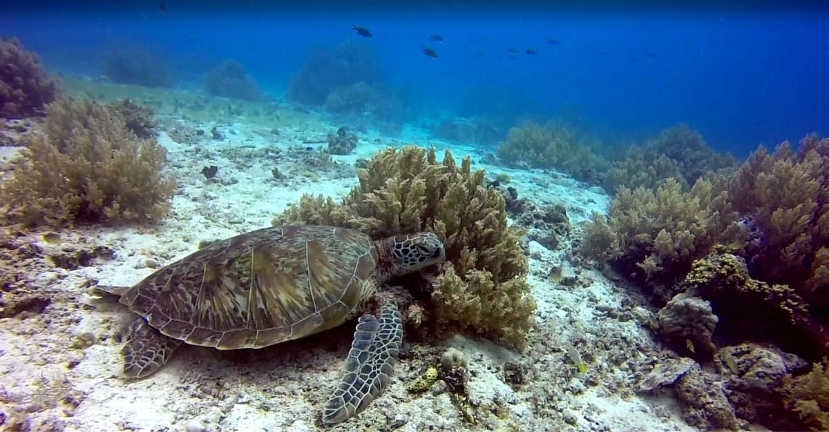 Turtle scuba diving Philippines Double-Barrelled Travel