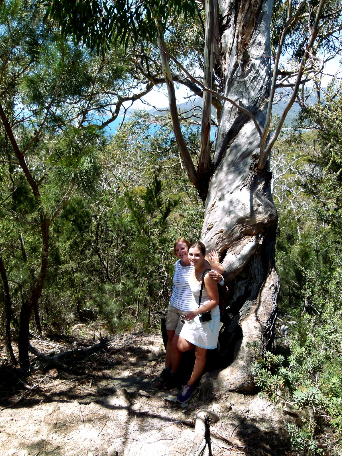 Wineglass Bay trail bush Double-Barrelled Travel