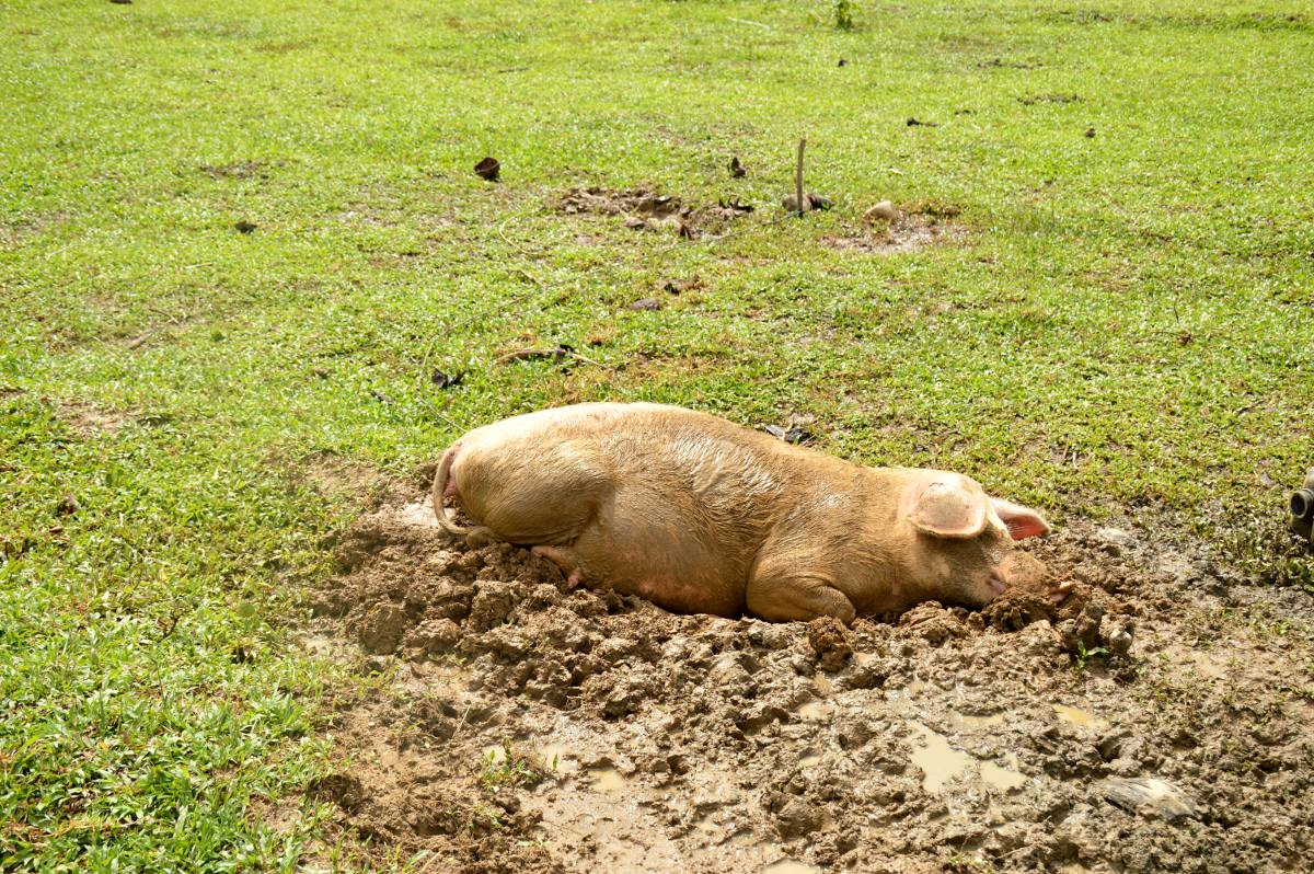 Happy as a pig in mud Double-Barrelled Travel