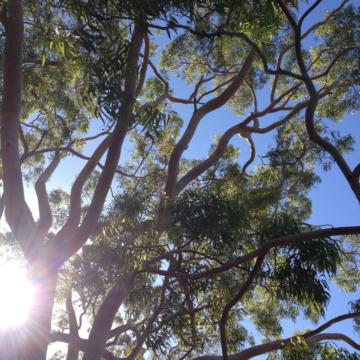 backyard trees
