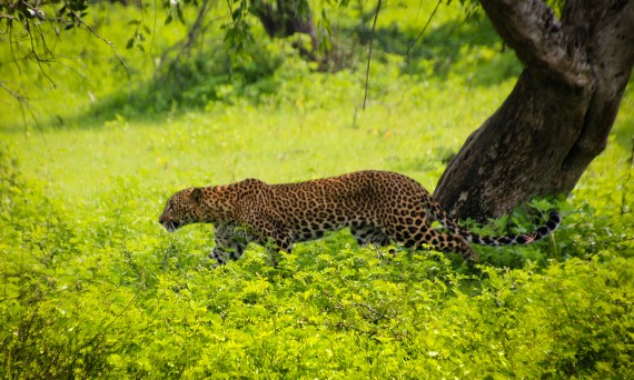 Yala National Park Sri Lanka Double-Barrelled Travel