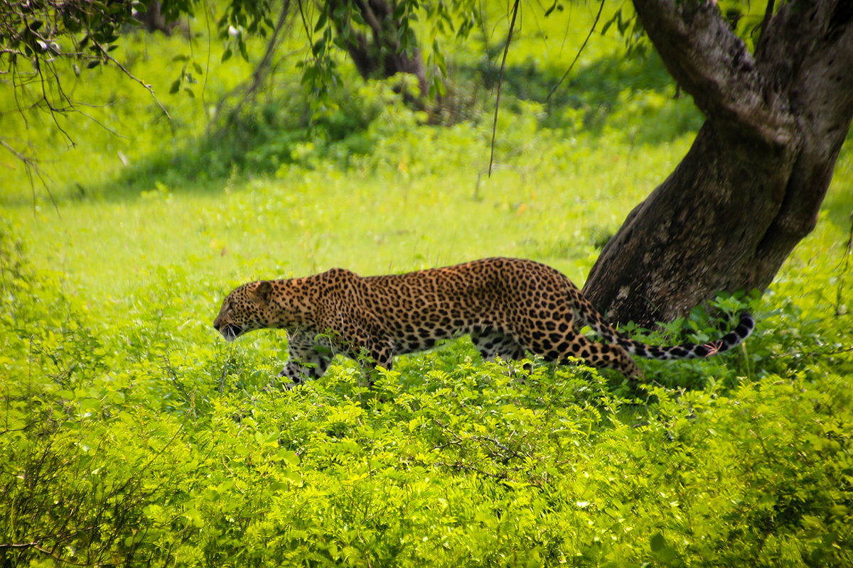 Yala National Park Sri Lanka Double-Barrelled Travel