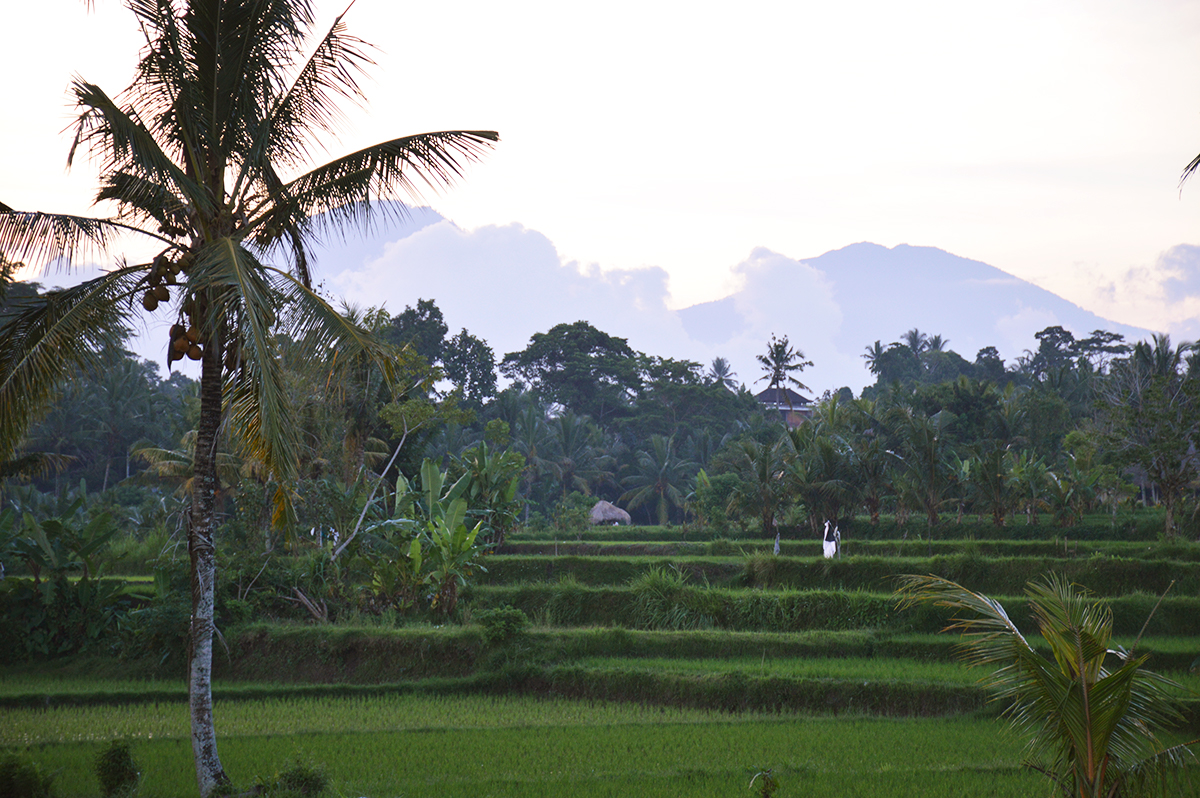 Things to do in Ubud Double-Barrelled Travel
