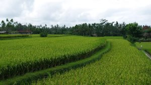 Things to do in Ubud ridge walk Double-Barrelled Travel