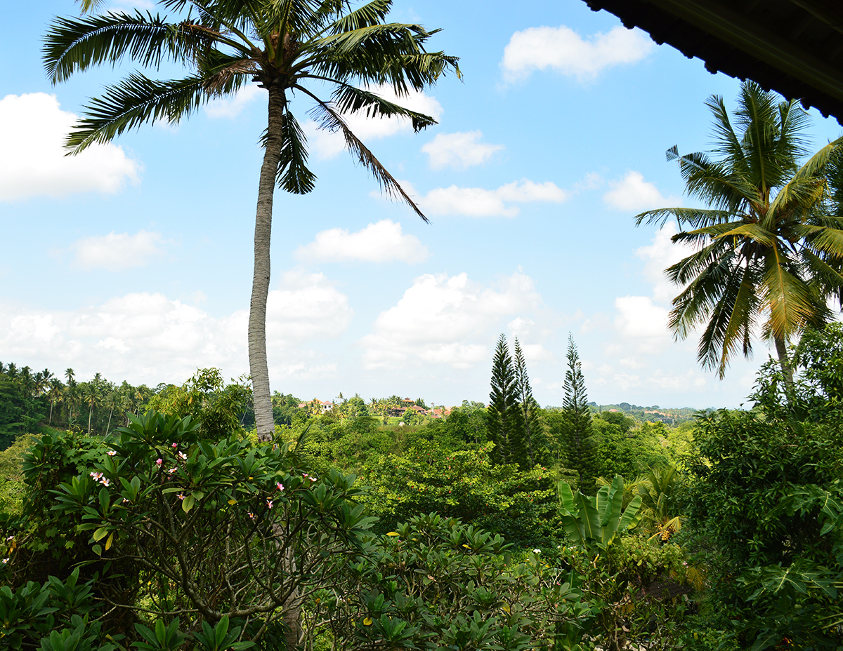 Things to do in Ubud the elephant view  Double-Barrelled Travel