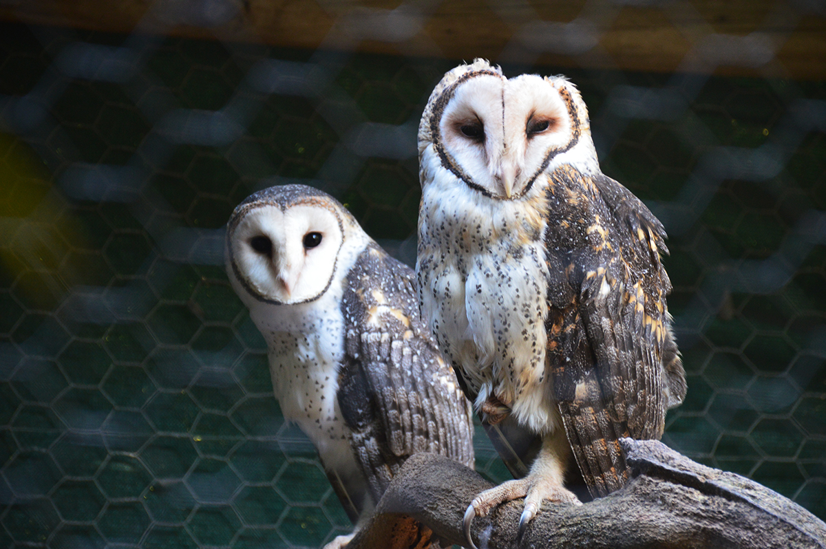 owls-caversham-park-double-barrelled-travel