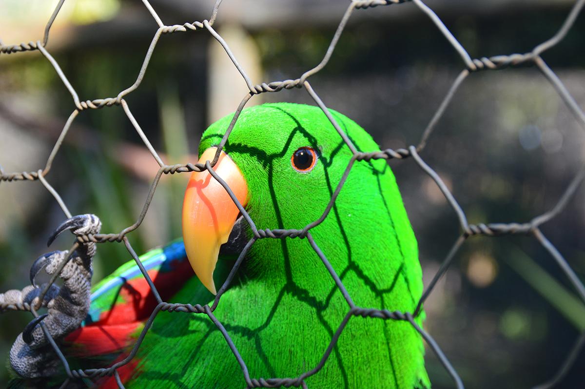 parrot-caversham-park-double-barrelled-travel