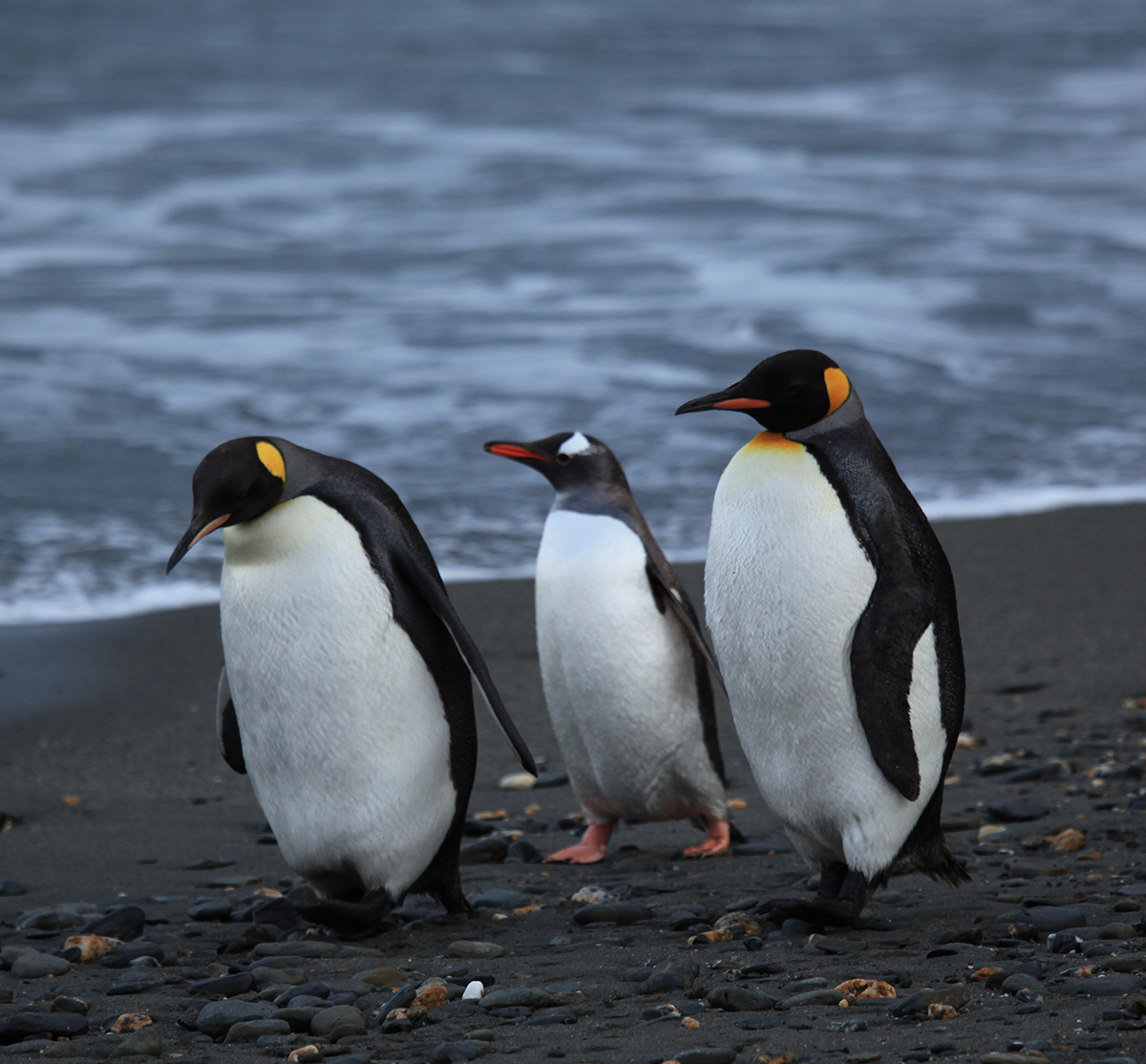 Penguins things to do in Antarctica Double-Barrelled Travel
