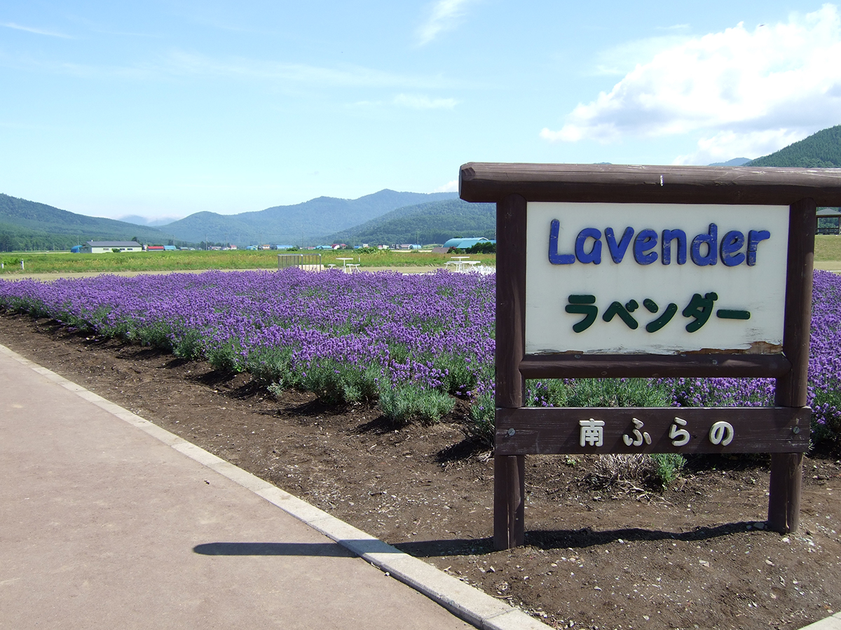 Lavender farm things to do in Hokkaido Japan Double-Barrelled Travel