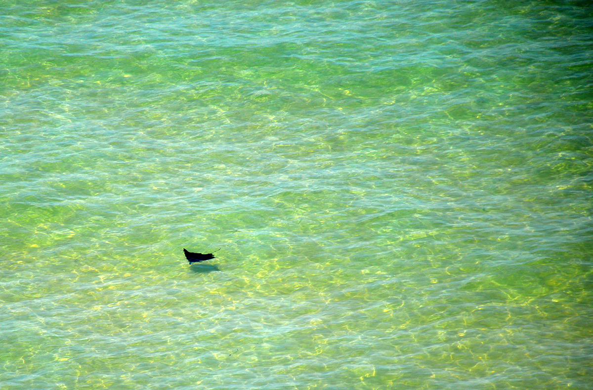 Sting ray francois peron National Park Double-barrelled travel