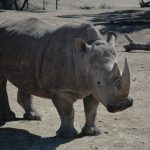 Rhino Monarto Zoo Double-Barrelled Travel