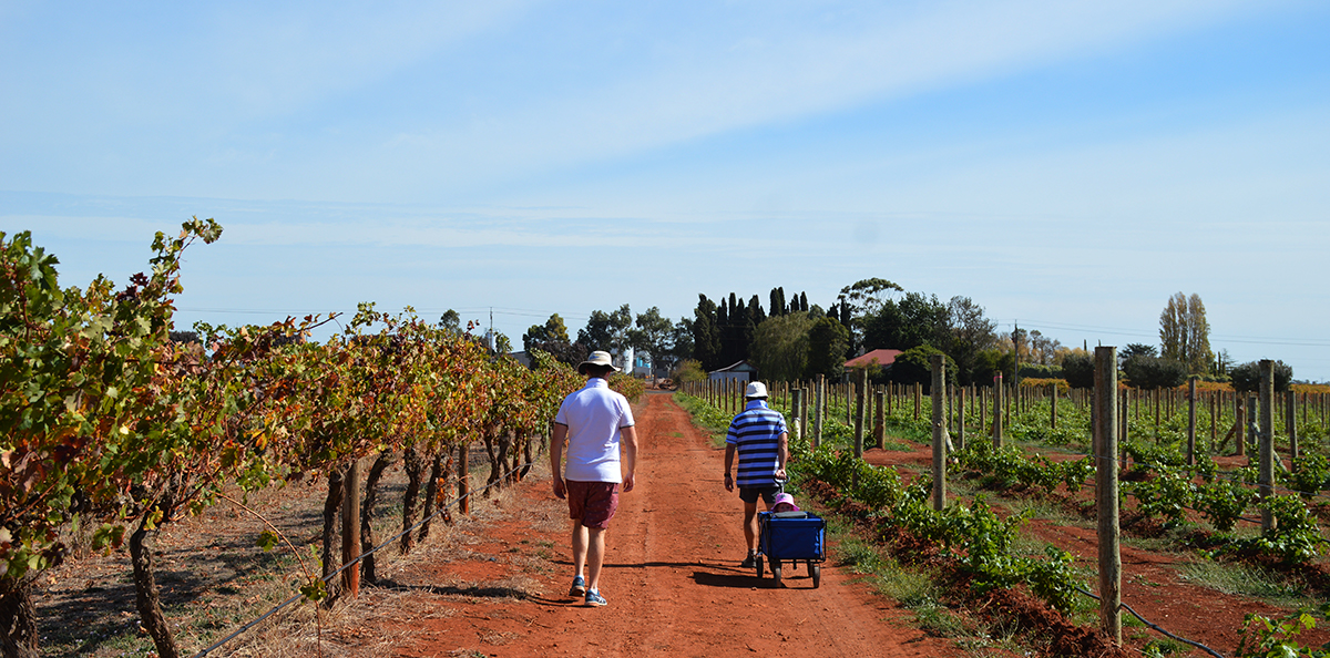 Walking through vineyard Double-Barrelled Travel