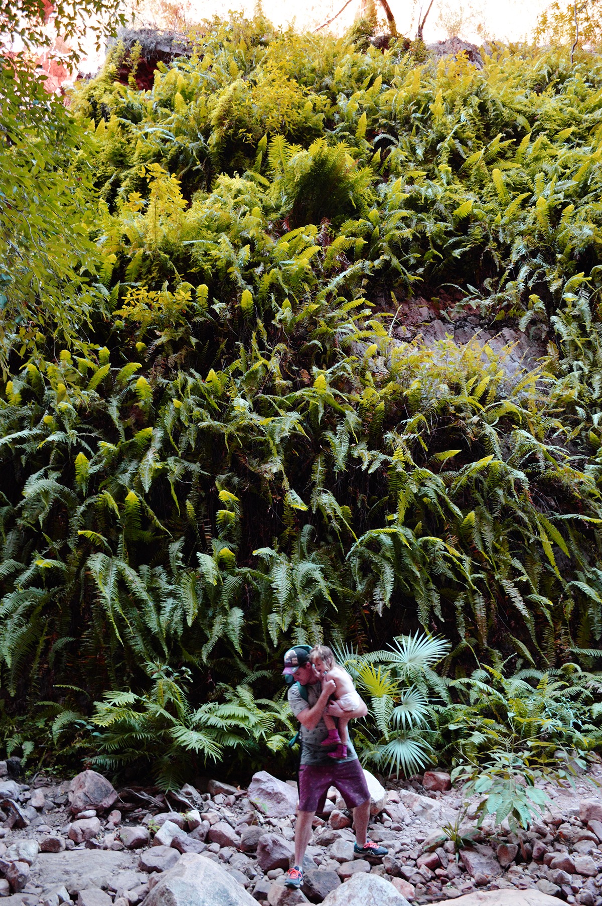El Questro Gorge ferns Double-Barrelled Travel
