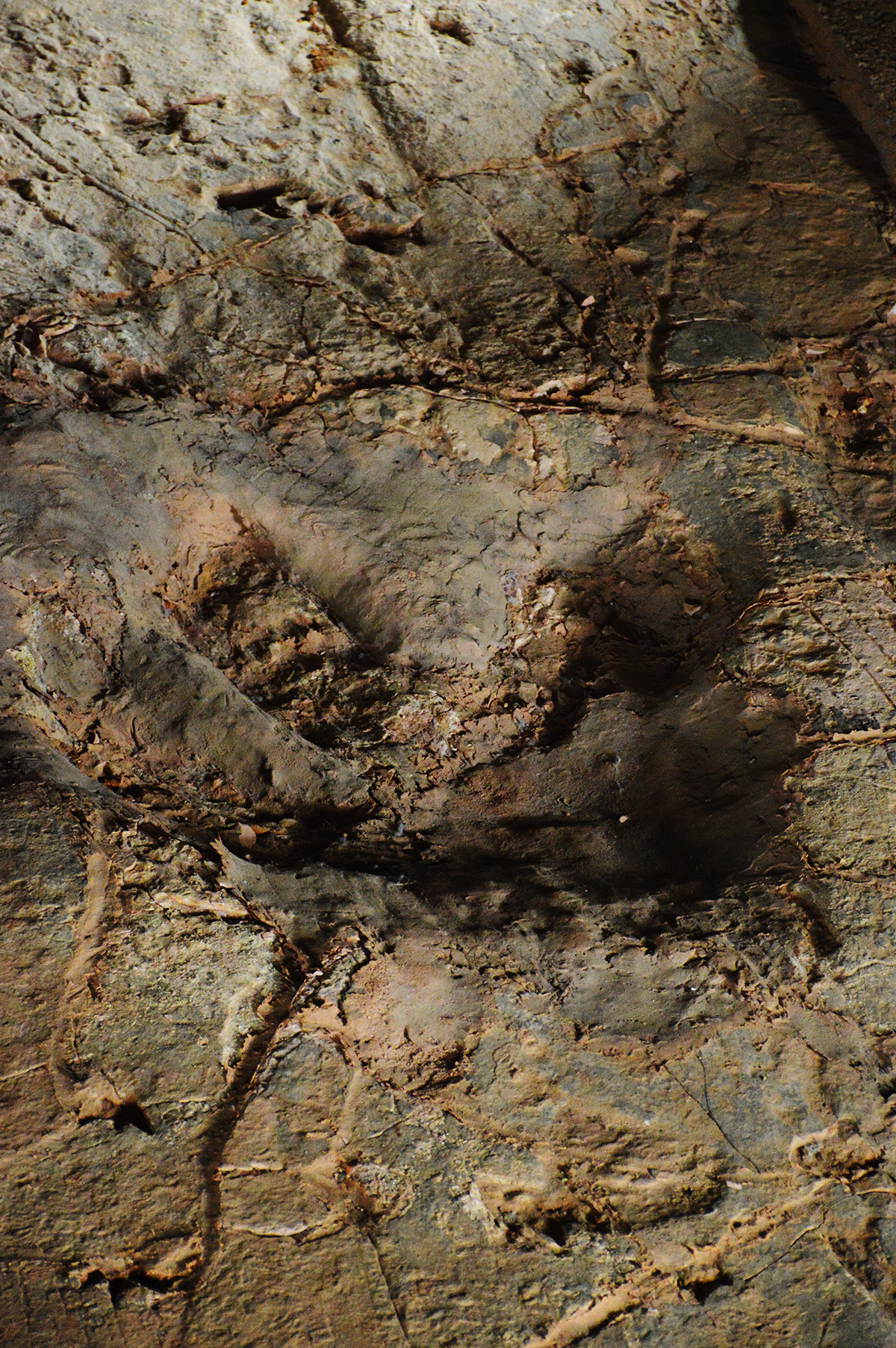 Dinosaur stampede footprint Double-Barrelled Travel