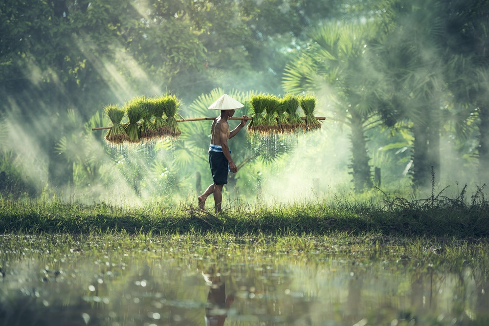agriculture-asia-countryside-cropland-235731