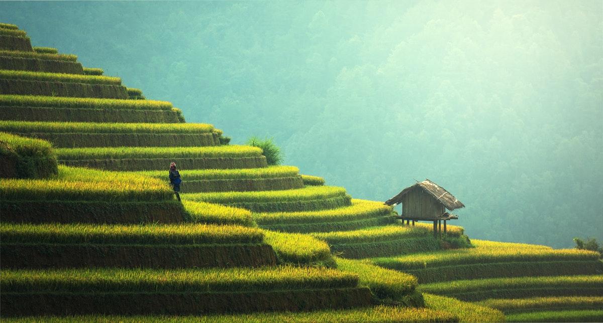 Asian fields